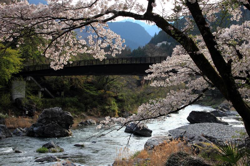 桜咲く渓谷