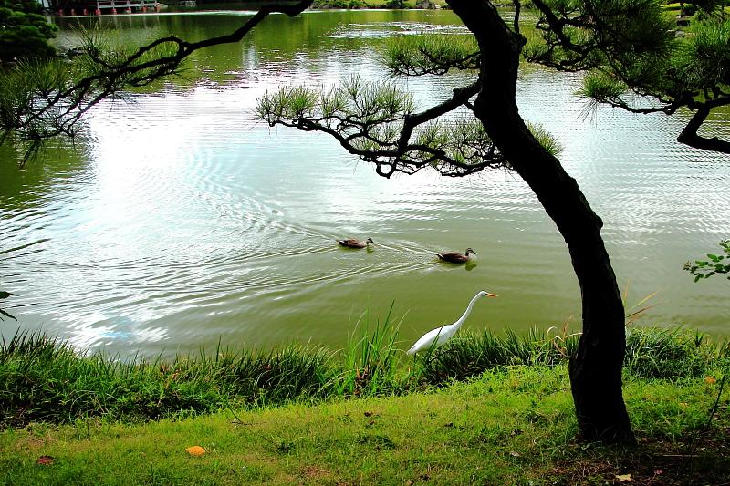 野鳥の楽園
