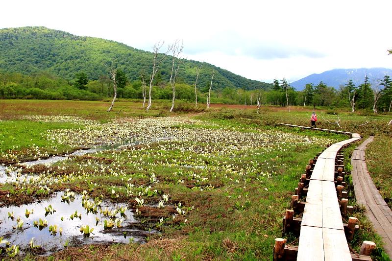 水芭蕉と木道