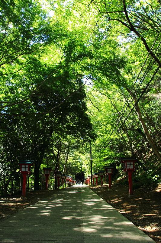 木洩れ日の参道