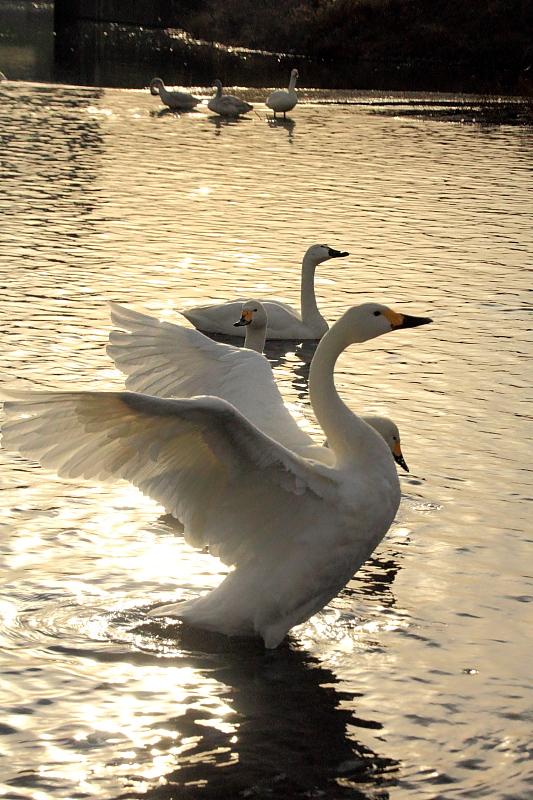 夕暮れの翼