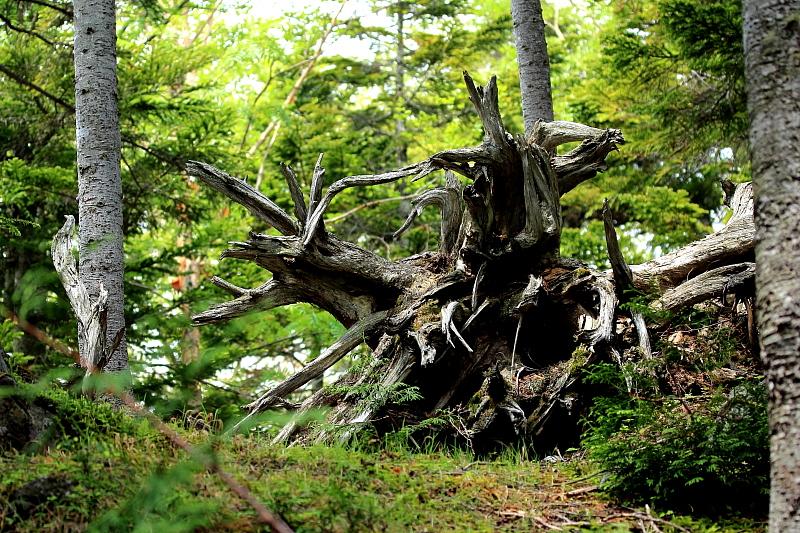 古木のオブジェ