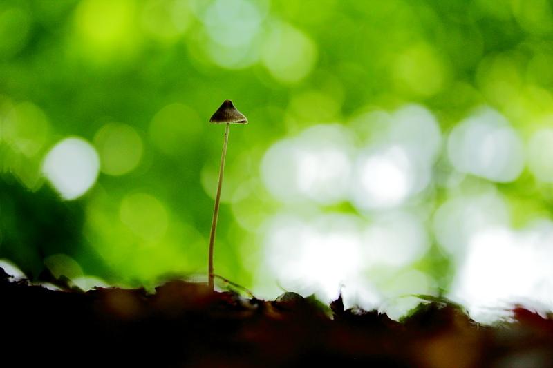 森のノッポさん