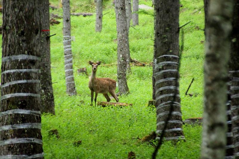 子鹿のバンビ