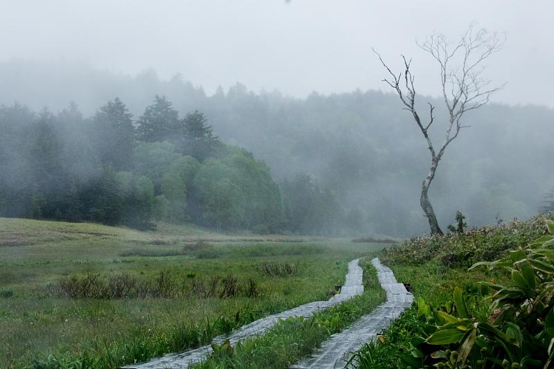 雨降りの大江湿原