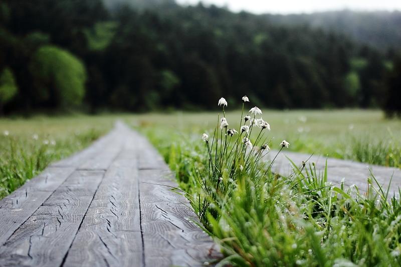静かな木道