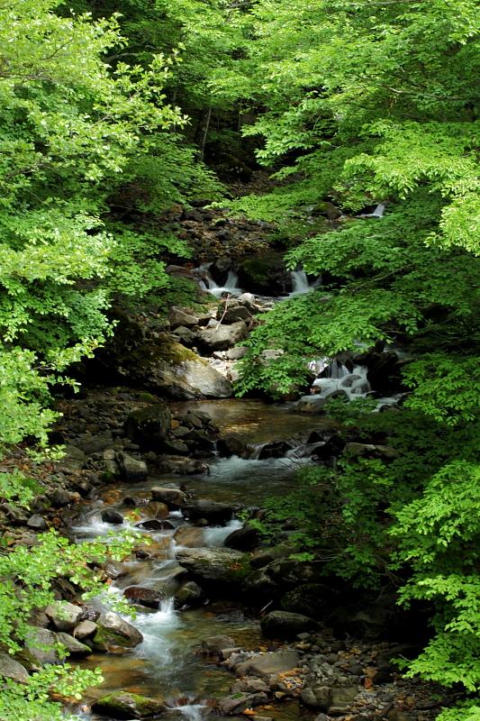 森を駆け降りる沢水