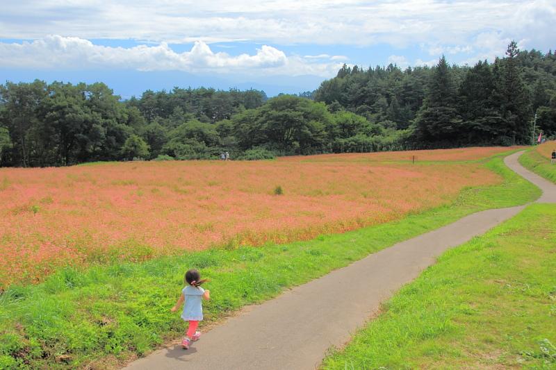 赤い散歩道