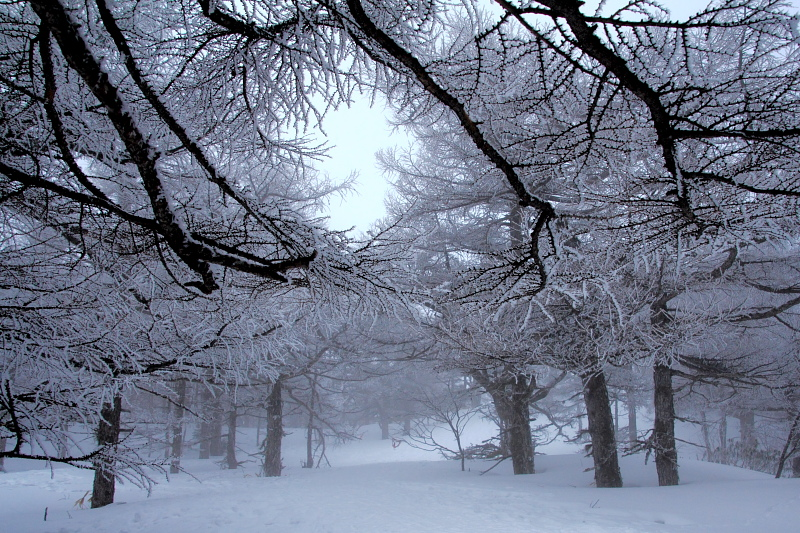 氷の花咲く森