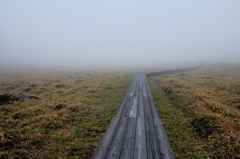 霧の池の平湿原