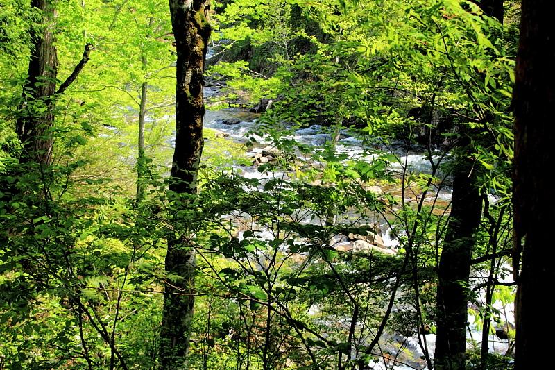 森の中を流れる
