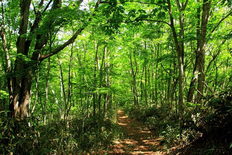 バードウオッチングと森林浴