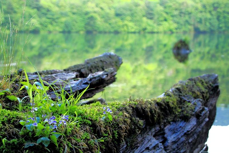 古木と苔と花の共生