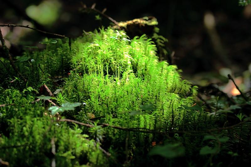 生い茂る苔