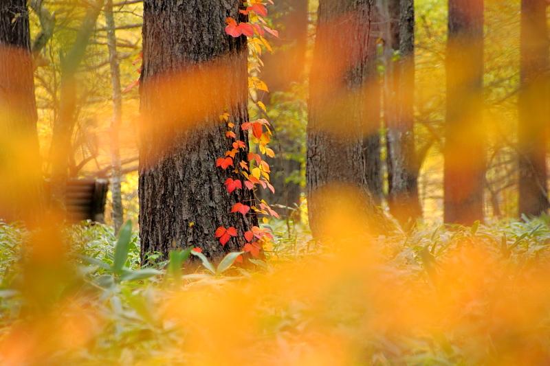 秋の飾り付け