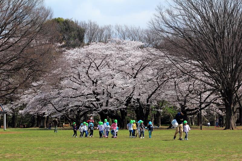 桜ドームの下で