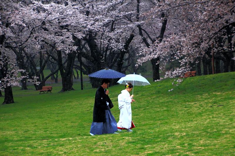 雨も桜も祝福の日