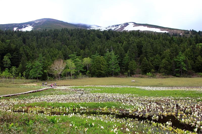 水芭蕉と至仏山