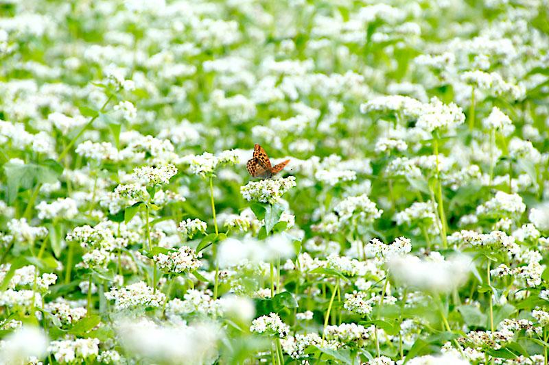 この花と〜まれ!