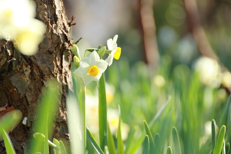 早春の陽に包まれて