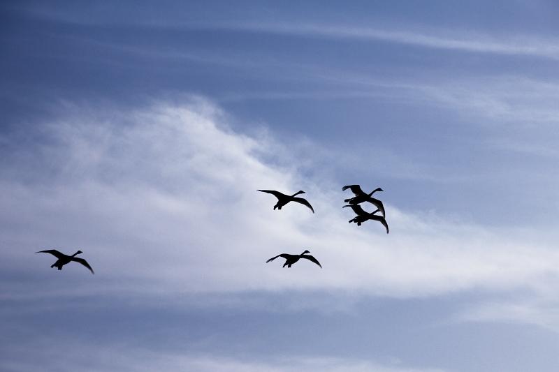 青空に飛ぶ