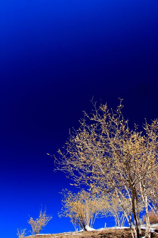 紺碧の空に咲く
