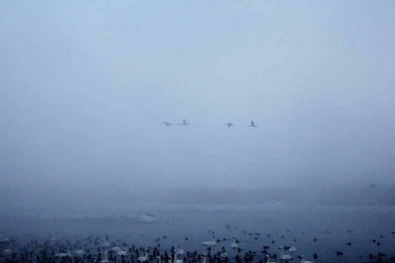 霧の中を飛ぶ