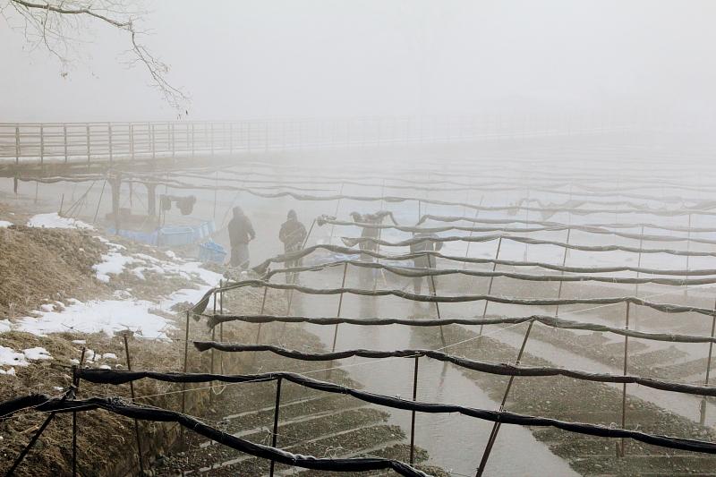 ワサビ田の冬