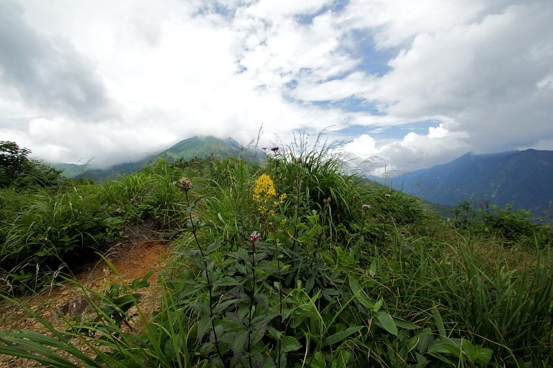 登山道の花