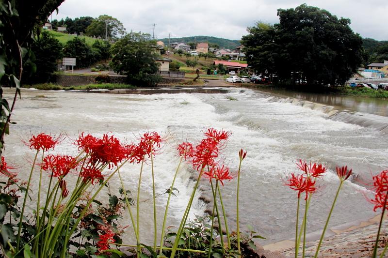 荒れる高麗川
