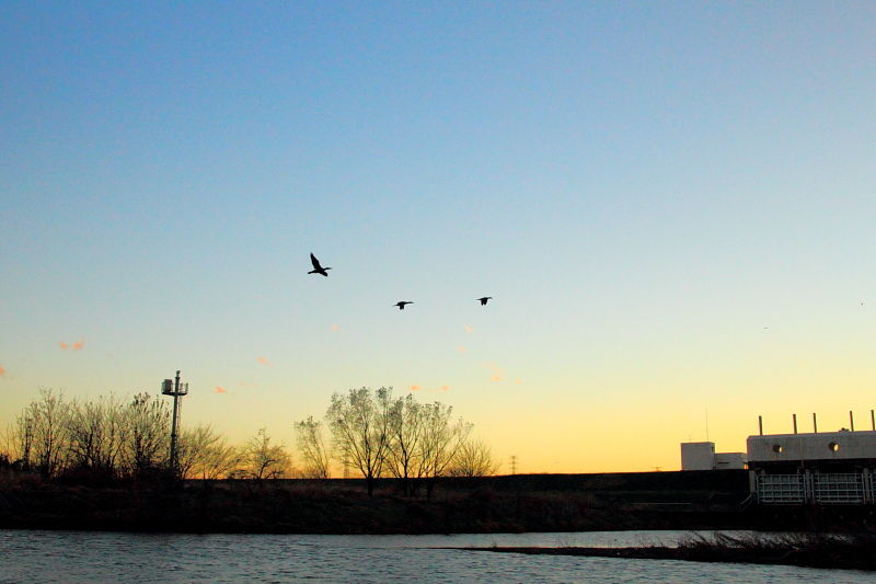夕映えの飛翔