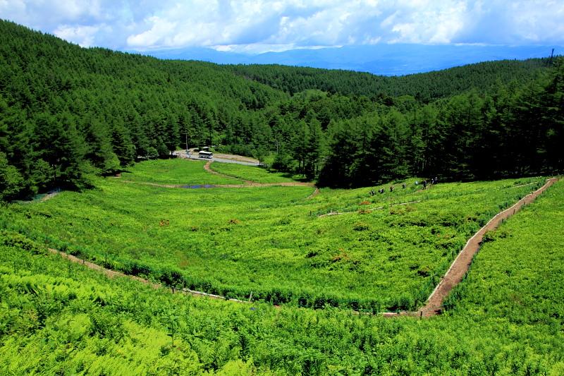 入笠山花畑
