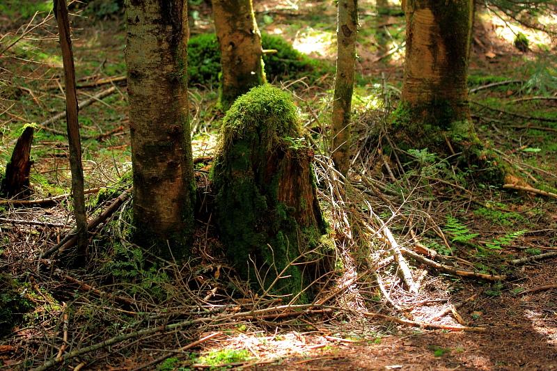 森のお地蔵様