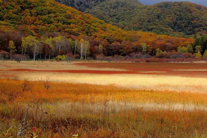 秋色の絨毯